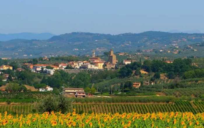 Zonnebloemen veld italie -Zakelijk italiaans leren.jpg